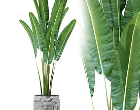 3D model Plants collection 225