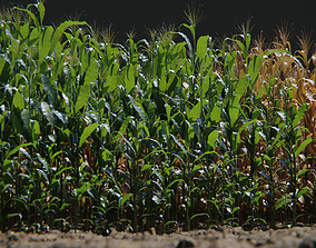 game-ready Corn Plants 15 Types in 5 Ages - PBR AssetKit