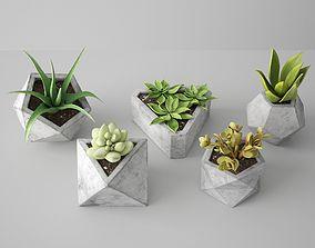 3D Concrete Potted Cactus Set