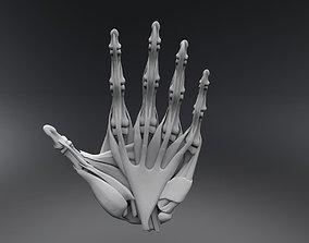 3D print model Human Hand Muscles
