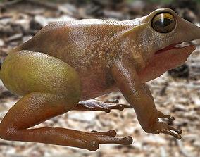 Frog rigged model 3D