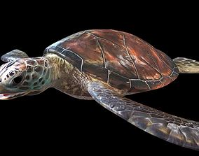 Sea Turtle Rigged 3D model