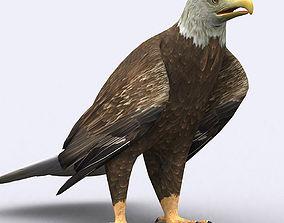 3DRT - Eagle animated