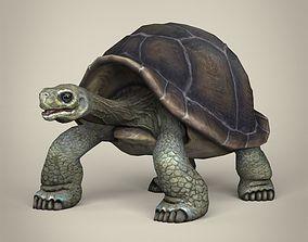 3D asset Low Poly Realistic Tortoise