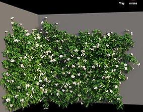 Rose plant set 37 3D model