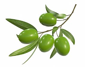 Olive branch with leaves 3D model