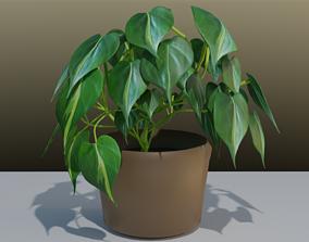 3D model Philodendron Scandens flower leaves 1
