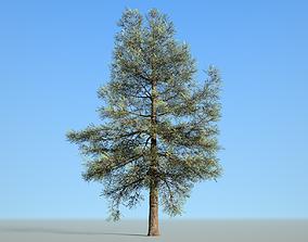 Conifer Tree 002 3D asset