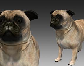 Pug Dog 3D