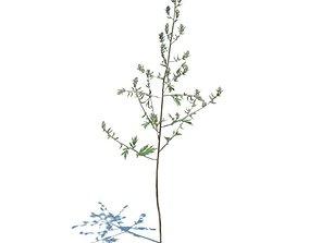 Small Sapling Tree 3D model
