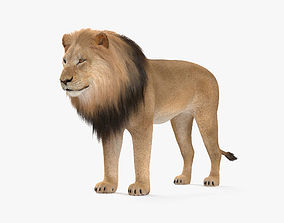 3D model Lion HD