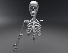 skull 3D model Upper Skeleton Articulated