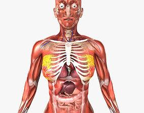 Female Anatomy - Rigged 3D model