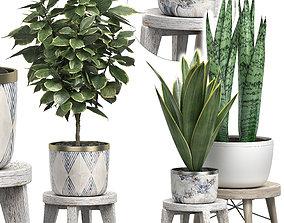 Potted plants Set 40 3D model
