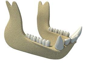 3D model Gorilla Animal jaw