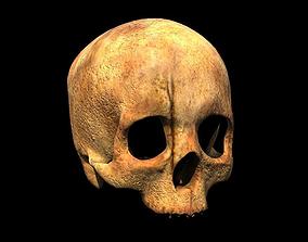 Human skull 3D asset