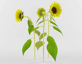 Sunflower 3D model yellow