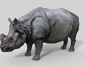 Photorealistic low-poly model rhinoceros 3D asset