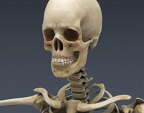 Female skeleton 3D model