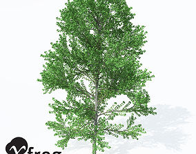 Xfrog Plants European Aspen 1 3D