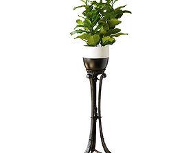 art 286 RG Ficus Lyrata 3D