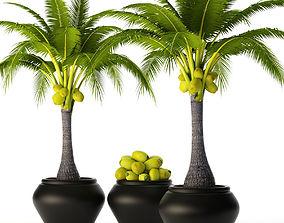 3D Coconut palm set 2