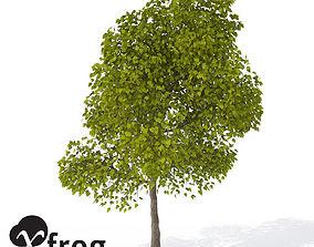 XfrogPlants Southern Catalpa 3D