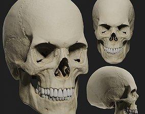 PBR male skull model PBR