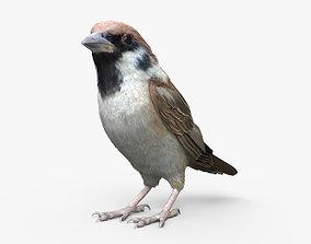 3D model Sparrow HD