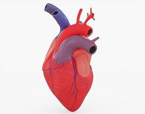 3D asset Human Heart Anatomy