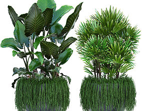 3D model Collection Exotic plants set