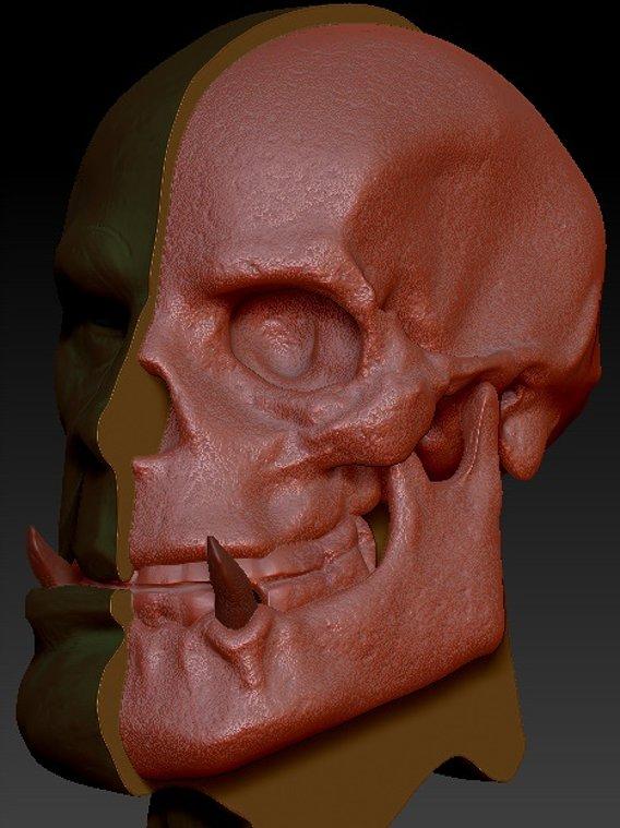 Orc Skull Anatomy