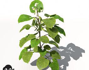 XfrogPlants Bean 3D