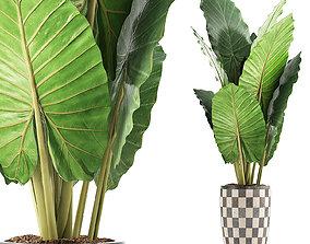 Plants Collection 88 3D