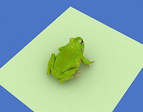 3D asset a frog