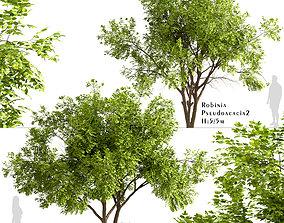 Set of Robinia Pseudoacacia or Black Locust Trees - 2 3D