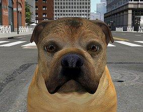 3D model FBEX-009 Dog