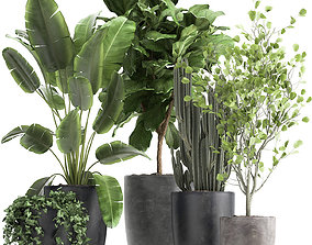 Houseplants in a flowerpot for the interior 961 3D model