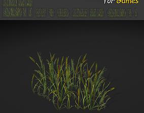 Plains Grass 3D asset