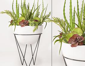 3D model Succulent arrangement cactus