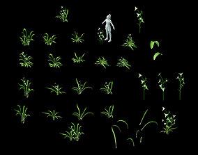 3D Wild plants - flowers 02