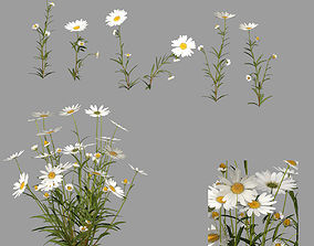 Flowers Chamomile 3D model game-ready