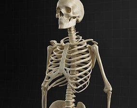 Anatomy skeleton 01 3D