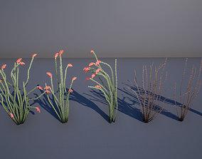Ocotillo Plant 3D asset