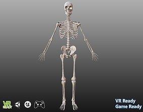 3D model game-ready Human Skeleton pelvic