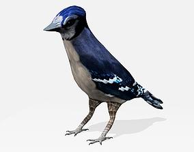 3D model Blue Jay