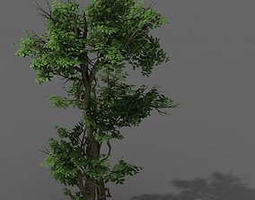 Plant - banyan tree 03 3D model