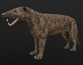 Hyaenodon horridus 3D model