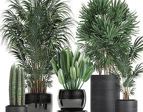 3D model Tropical plants in a black flowerpots 738