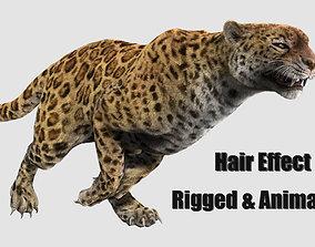 leopard panther puma jaguar 3D asset